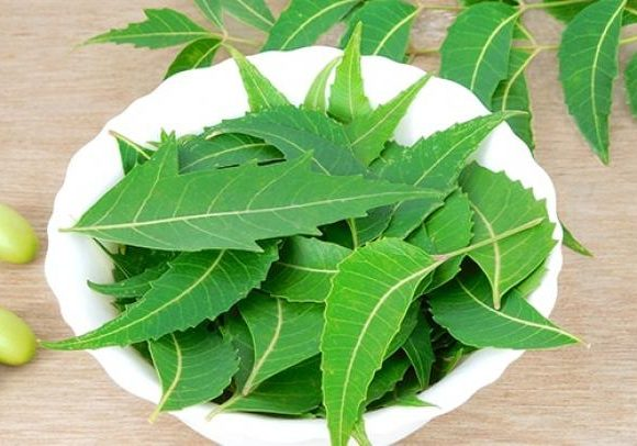 How to make Neem Toner for Acne & Glass Clear skin | lazy girl's DIY